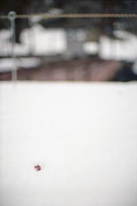 早春の冷たい桜と転車台 - Film&Gasoline