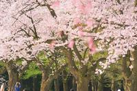 樹木公園 - どーいね!!