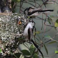子育て中だったのに - 『彩の国ピンボケ野鳥写真館』
