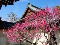 梅の花咲く梅宮大社 - 徒然彩時記