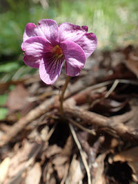大江高山② - 清治の花便り