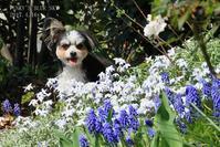 庭チポにかかっ、 ^^ - FUNKY'S BLUE SKY