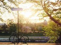 お花見RIDEとリナ・ボ・バルディ展 - 山とコーヒーと自転車と時々アートのある暮らし