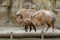 荒ぶるテン - 動物園に嵌り中