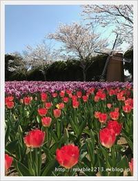 春爛漫 - 千葉県旭市アロマセラピー*atelier marble