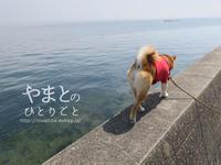 柴犬連れて、海岸沿いを歩く@愛知県南知多町 【動画あり】 - yamatoのひとりごと