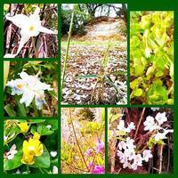 春名残  ササの芽立ちに  夏の声 - グリーンノート マクロビカフェ&土の音(オカリナ工房)
