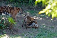 動じない母親 - 動物園へ行こう