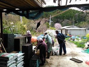 種まき - 山さと農園のブログ