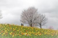 花の丘 - 心のままに
