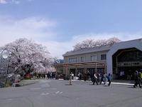 ぶどうのお寺の春@大善寺 - e-voyage