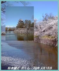 桜の季節 - 人生塞翁が馬(葦跡)