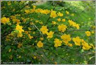 花公園の花いろいろ - 野鳥の素顔 <野鳥と・・・他、日々の出来事>