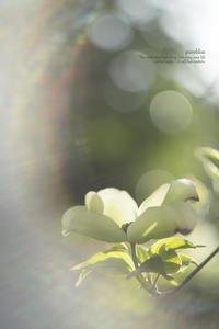 光、燦々と - purebliss