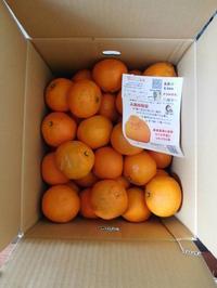 柑橘系?! - 日々の雑記ノオト