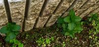春の庭の植物たち その1 - 風に吹かれて+++水の町にくらす