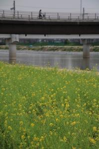 藤田八束の鉄道写真@武庫川鉄橋を渡る貨物列車の写真 - 藤田八束の日記