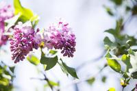季節の香り - 我夢工房