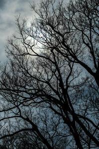 木のかたち - memory