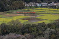 今年も黄色い菜の花畑をキハが通る - 2017年春・小湊 - - ねこの撮った汽車