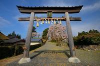 桜便り2017 京北町の桜巡り@弓削八幡宮社の出逢い桜 - デジタルな鍛冶屋の写真歩記