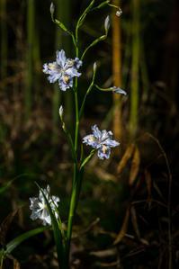 春が進む日和田山 - デジカメ写真集