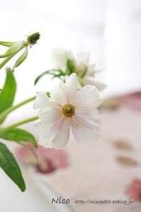 フォトレッスンでの1枚。お花が可愛く撮れました♪ - Nico  ちいさな編み物たち