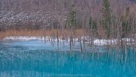 青い池が開放しました - Photo 森の声