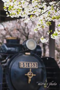 D51と桜。 - MIRU'S PHOTO