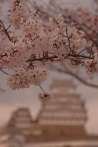 姫路城の桜(2017/4/5) 其の④ - 南の気ままな写真日記