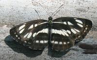 モルフォ蝶 - きのこは素敵