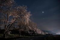 sakura hira hira - Tom's  OM-D