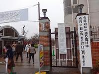大阪造幣局 今年の桜-4 - てんてまり@Up.town