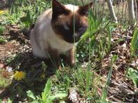 猫たちも強風は苦手です - Organicさんの気まぐれ日記