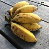 やたら美味しい、うちのバナナ/ Our Bananas are Delicious - アメリカからニュージーランドへ