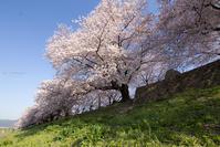 桜 再び・・・ - My diary