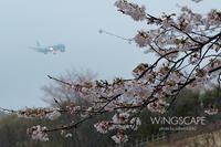 桜雨 - WiNGSCAPE