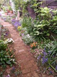 曇り空の春の日 お庭の様子 - 美鈴とトラと私とお庭