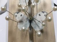 蝶運の巻 - てふてふ自然散策記