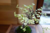 欅の盆栽 - g's style day by day ー京都嵐山から、暮らしを楽しむ日々をお届けしますー