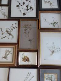 私が雑草と呼ばなくなった理由 - 暮らしと植物のブログ