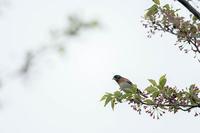 ナゼこのような場所に‥ - 趣味の野鳥撮影