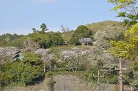 北鎌倉の桜 東慶寺 2 - Amour Tendre