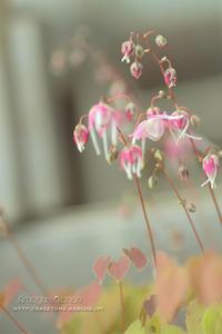 ちいさな開花宣言** - きまぐれ*風音・・kanon・・