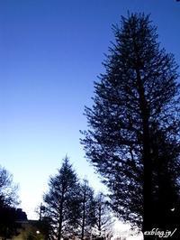 夕方の散歩心地よく - 丁寧な生活をゆっくりと2
