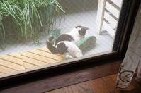 最近の猫事情20 - 鳥会えず猫生活