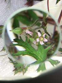 この植物何かな? - BEAUTIFUL THING