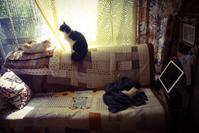 子猫がうちにやって来た    その顛末 - 糸巻きパレットガーデン