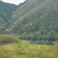 山桜と萌黄色 - ゆる鉄旅情