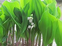 白い花 - トムジーのつぶやき3